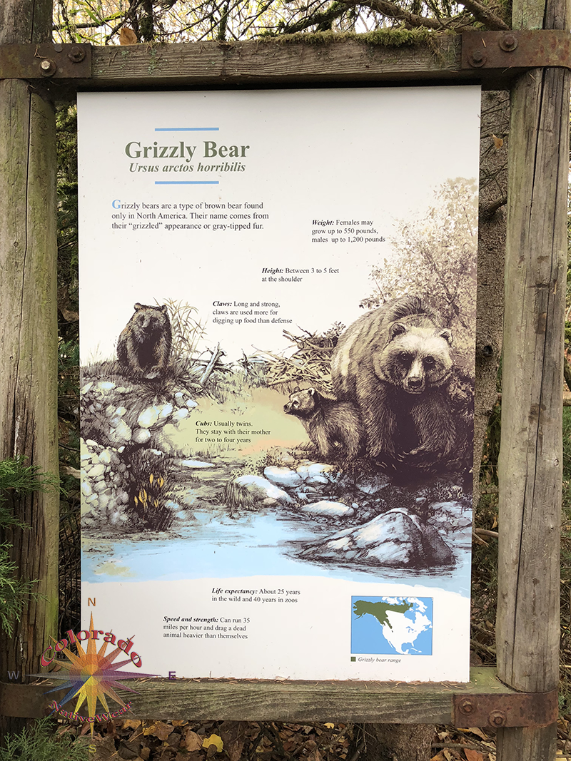 Woodland Park Zoo Seattle Grizzly bear exhibit is the second educational station after view and learning about Artic Wolves.