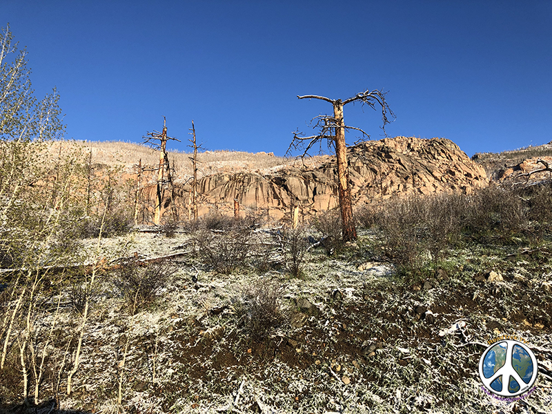 Starkness caused by fire along Lost Creek Wilderness