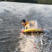 Water Skiing Going to the Dogs