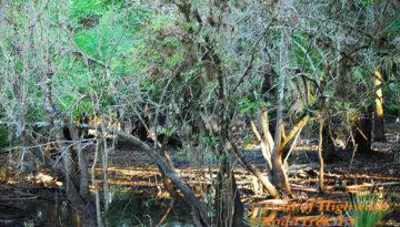 Morning Light-Myakka River State Park-Trail-Hiking-Florida-Trail of Highways-RoadTrek TV-Organic Content-Marketing-Social SEO-Travel-Media-