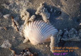 Sea Shell-Art-Nature-Georgia-St Simons Island-Trail of Highways-RoadTrek TV-Organic Content-Marketing-Social SEO-Travel-Media-