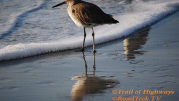 Sandpiper-Beach-St Simons Island-Trail of Highways-RoadTrek TV-Organic Content-Marketing-Social SEO-Travel-Media-