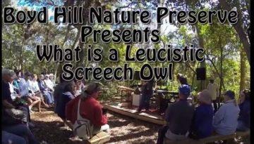 Leucistic-Screech Owl-Boyd Hill Nature Preserve-Florida-Trail of Highways-RoadTrek TV-Organic Content-Marketing-Social SEO-Travel-Media-