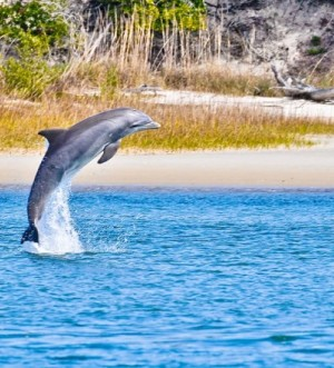 Dolphin and Bird Watching Adventures St. Augustine ECO Tours