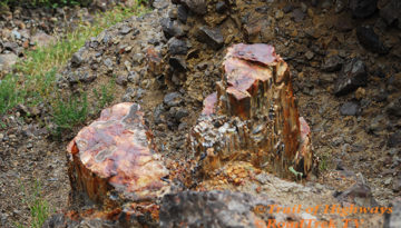 Petrified Red-Gallatin National Forest-Tom Miner-Campground-Trail of Highways-RoadTrek TV-Get Lost in America-Organic-Content-Marketing-Social-Media-Travel-Tom Ski-Skibowski-Social SEO-Photography