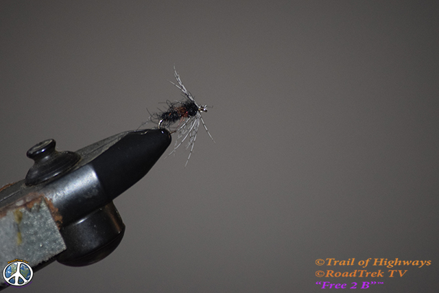 Sparkle Soft Hackle Ant