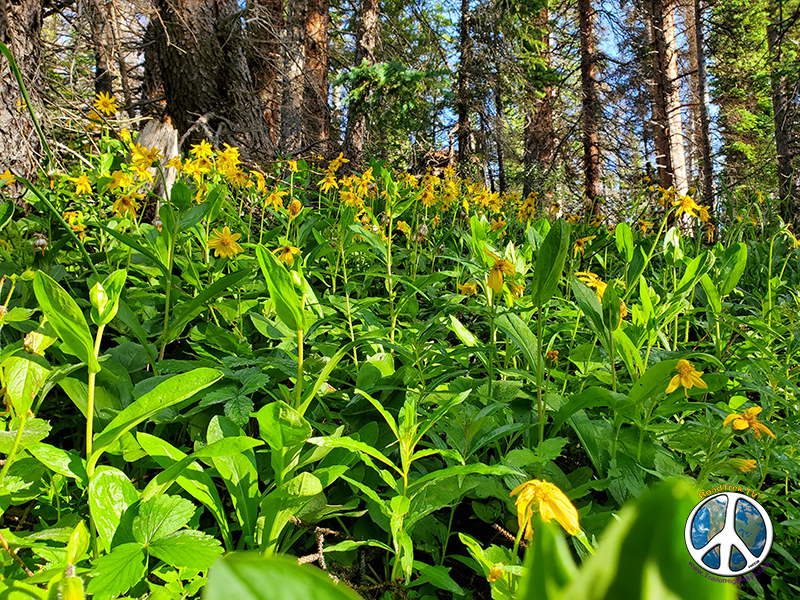 Wildflowers in large patch work growths along the lower trail
