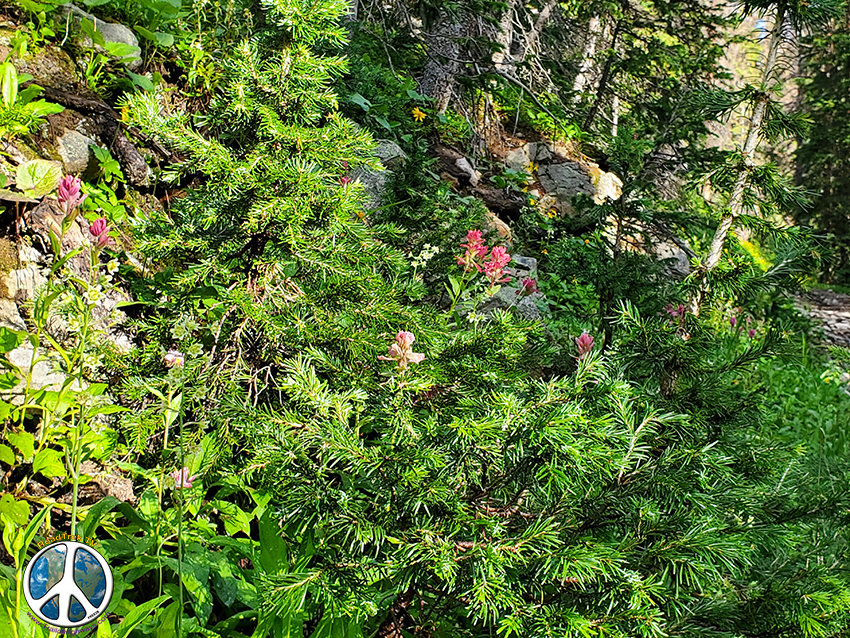 Lust color of yellow, red and brilliant greens highlight the trails edge