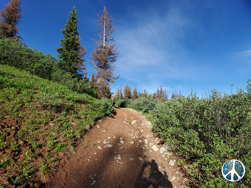 Trail rises up to the pass with a moderate elevation gain