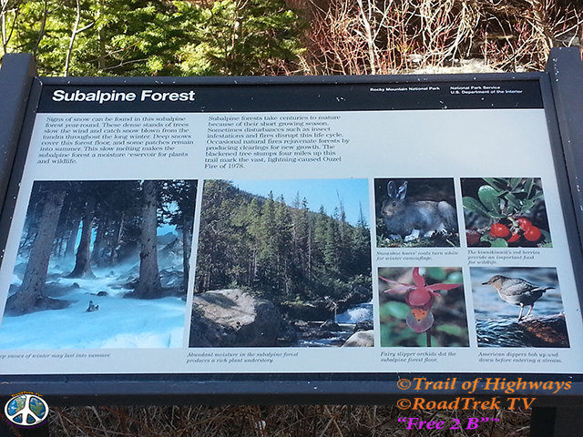Wild Basin Trail-Calypso Cascades-Ouzel Falls Trail-RMNP-Coloradolive-Copeland Falls-Trail of Highways-RoadTrek TV-Tom Ski-Social SEO-Photography-3