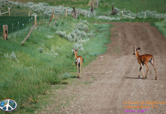 Montana-Backroads-Spring-Birdwatching-Trail of Highways-RoadTrek TV-Social SEO-Organic-Content Marketing-Tom Ski-Skibowski-Photography-Travel-Media-33