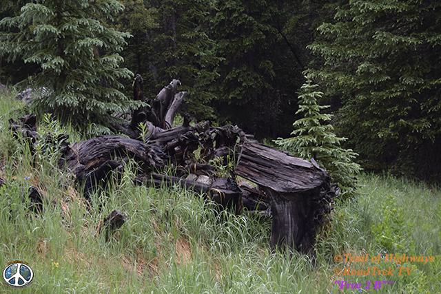 Ptarmigan Lake Trail-Colorado-Hiking-Trail of Highways-RoadTrek TV-Social SEO-Organic-Content Marketing-Tom Ski-Skibowski-Photography-Travel-17