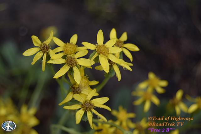 Ptarmigan Lake Trail-Colorado-Hiking-Trail of Highways-RoadTrek TV-Social SEO-Organic-Content Marketing-Tom Ski-Skibowski-Photography-Travel-6