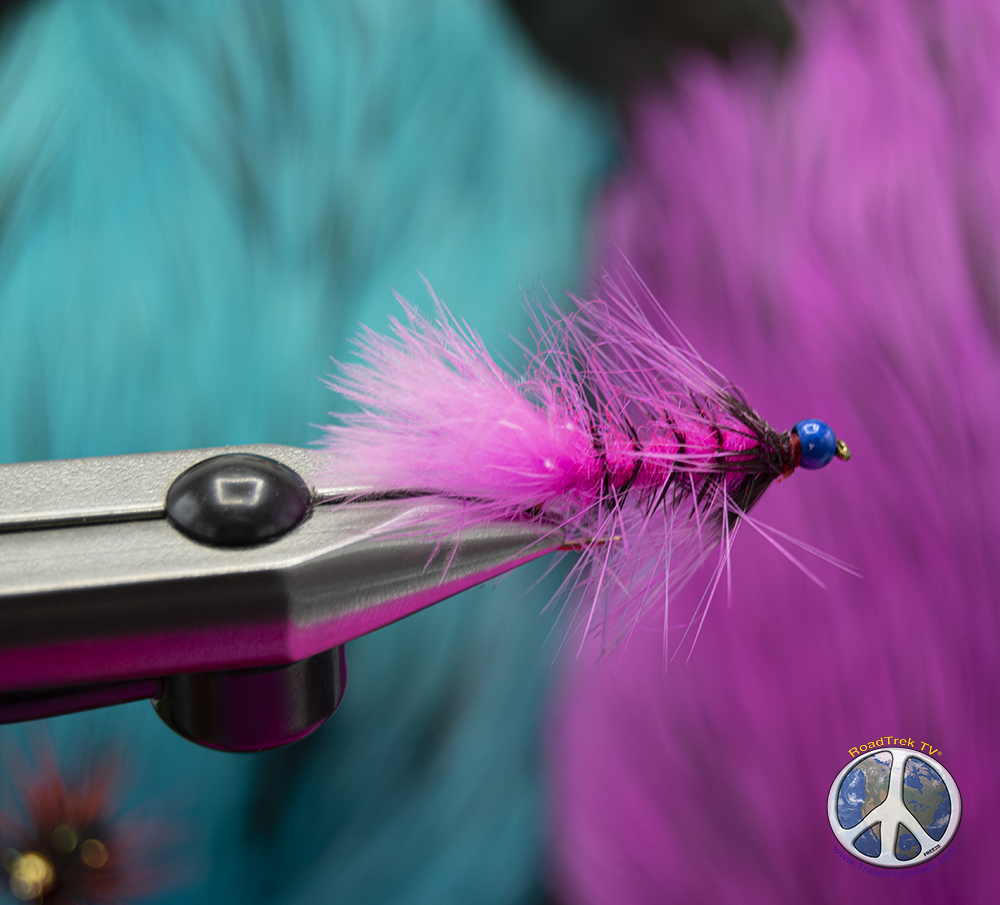 tying wooly buggers pink flame has the blues