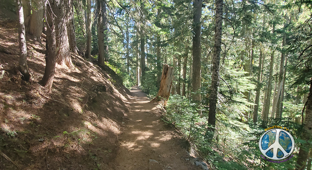 Climbing the forest becomes more open with more flora along the trail