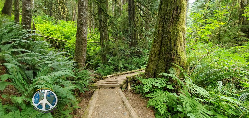 Lush coastal Puget Sound Forests