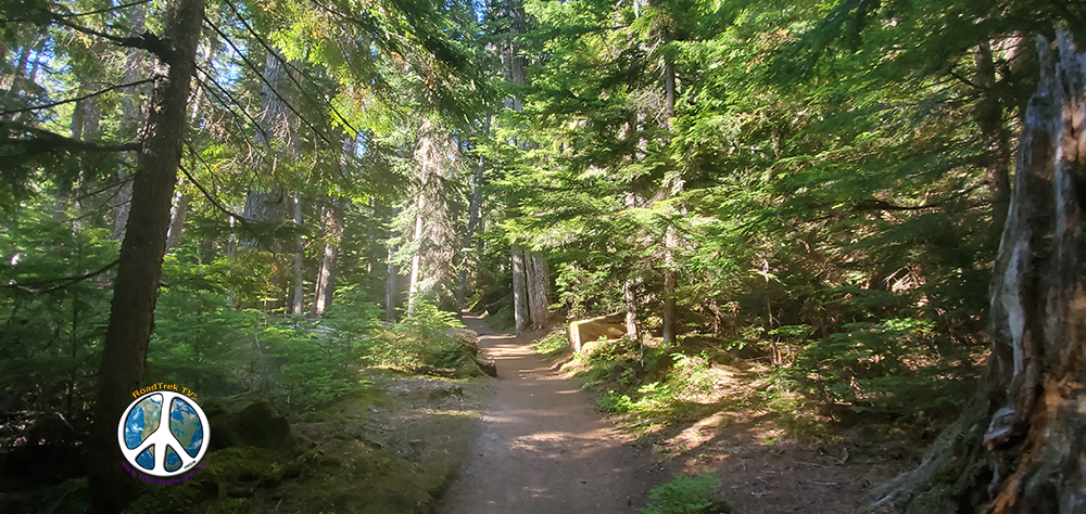 Summerland Trail for the first two mile is dense rain forest with streams crossing the trail