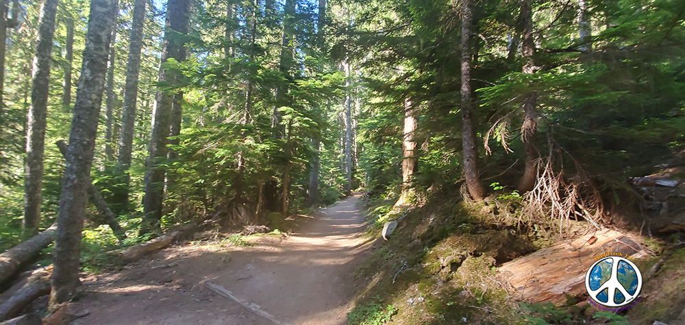 Lower trail is wide and flat as you follow a stream bottom through the forest