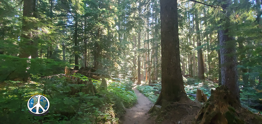 Sun is beginning to fill the shadows on the trail and forest