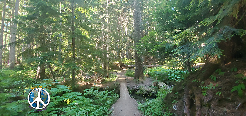 Two small streams enter a bigger stream down below as you cross on this log in Summerland Wonderland Trail Similitude-1