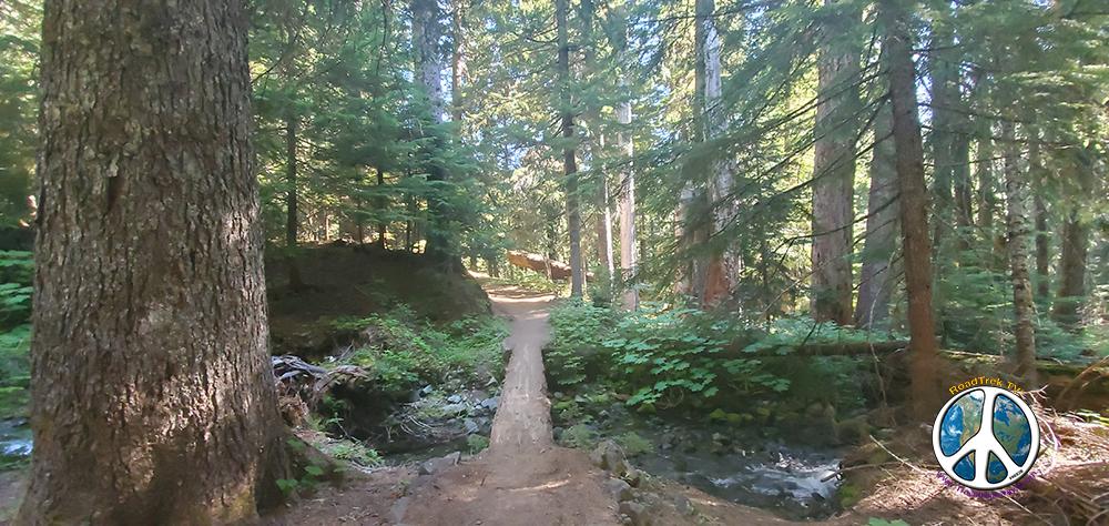 Looking back across log walk way Summerland Wonderland Trail Similitude 1-2